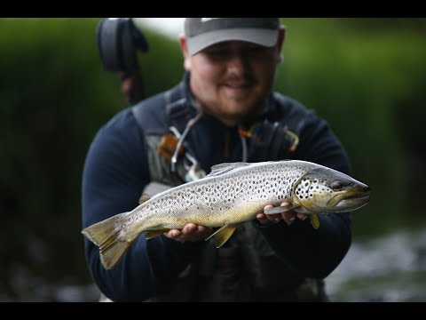 Big Brown Trout On Dry Fly - Epic Take And Battle - Fishing River Teifi, Wales