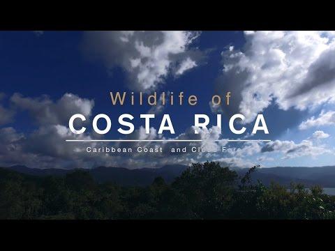 Costa Rica - Amazing Wildlife