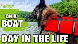 Day in the Life of a Belgian Shepherd Dog   Boat Trip with a Life Jacket