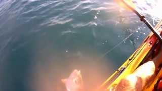 Pesca a traina in kayak - Kayak fishing trolling - Select HD(Alcuni momenti dell'ultima uscita in kayak http://kayakfishingmatera.blogspot.it/, 2013-07-30T08:32:00.000Z)