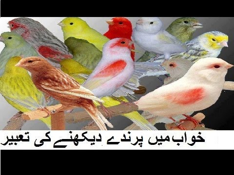 Khwab Mein Parinda Dekhna Ki Tabeer| Birds Islamic Dream interpretation|  Meaning of Dreams in hindi