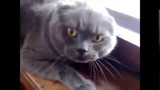 Самые  опасные животные планеты   злые коты