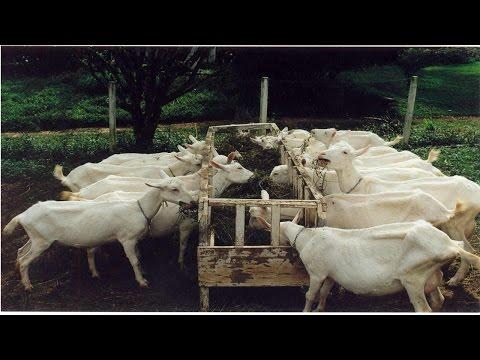 Clique e veja o vídeo Curso Sistema Orgânico de Criação de Cabras