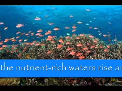 Marine Ecosystem :D