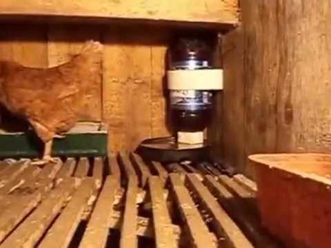 Как можно построить сарай стайку для кур, уток, свиней и молодняка