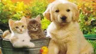 ПАЗЛЫ КОТЫ И СОБАКИ / Котята и Щенки. Пазлы для детей.  Puzzles Cats and dogs.  Puzzles for kids.