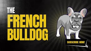 The History Of The French Bulldog