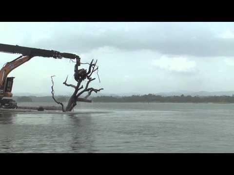 Khai thác gỗ trên hồ