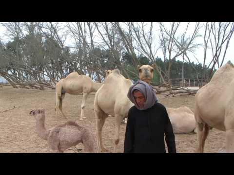 Memories of Bahrain - Part 1 - Dilmun Days 1