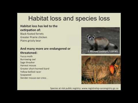 Biodiversity in Alberta's Grasslands