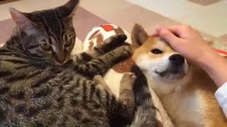 FUNNY DOG and CAT Videos Cats vs Dogs Compilation #13