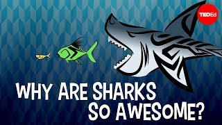 Why are sharks so awesome? - Tierney Thys
