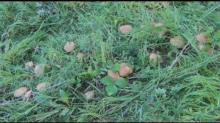 Белые грибы - 20 штук на 3 м²
