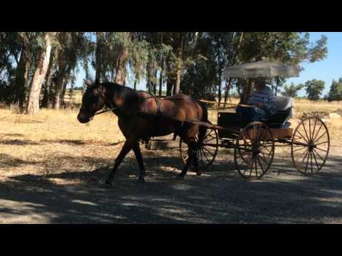 1890's Vintage Doctor's Wagon Horse Drawn Buggy
