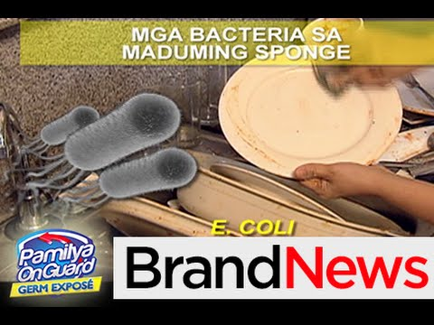 Kitchen sponge home to millions of bacteria\' - YouTube
