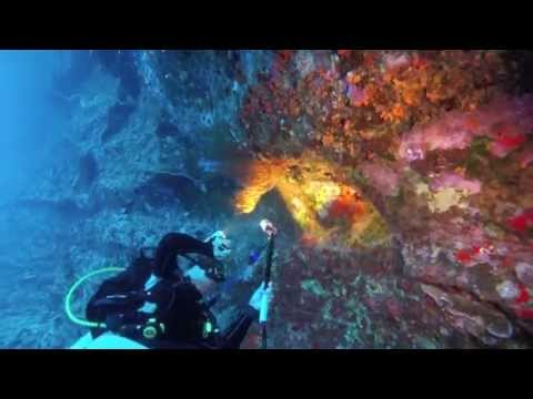 Molokini Backwall Dive