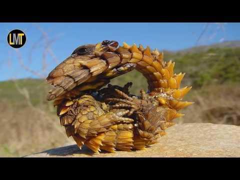 10 Dragons Ne Croient Pas Qui Existent Encore