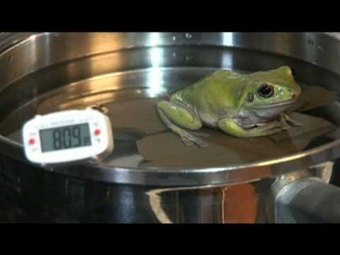 Frog In A Pot - YouTube