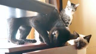 【猫】アイツ持って行きやがった!