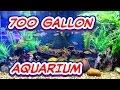 700 Gallon Aquarium