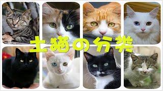 【科普】超详细土猫の分类最全攻略适合新手养の土猫类别推荐猫奴必收藏
