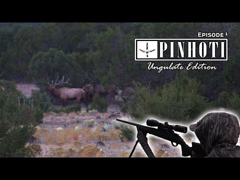 NEW MEXICO ELK HUNTING | SHOTS FIRED at SUNRISE | SCREAMING BULLS and the UNTHINKABLE- Pinhoti