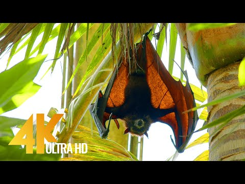 Nature and Wildlife of BALI, Indonesia - 4K Relaxation Video (with Nature Sounds)