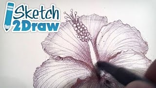 Doodling a Hibiscus Flower with Ball Point Pen
