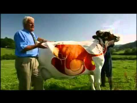 A cows digestive system youtube youtube ccuart Image collections