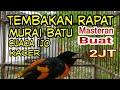 Pancingan Masteran Burung Mantenan Tembakan Rapat Bikin Gacomu Juara  Mp3 - Mp4 Download