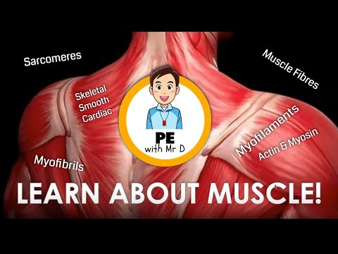 The Ultimate Guide to Muscle Anatomy and Physiology | PE Buddy