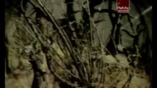 Alice - Una notte speciale Blazmix32
