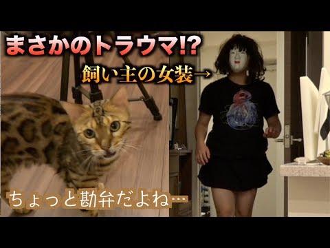まさかのトラウマ!?飼い主が女装しても猫たちは気づくのか?