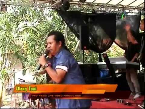 Wong Tani - Sultan Trenggono - Nirwana Stage Patrol Dangdut Kolaborasi