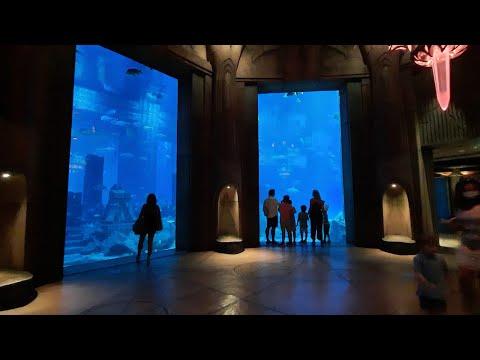 Dubai: The Largest Aquarium in UAE#TRAVELMe