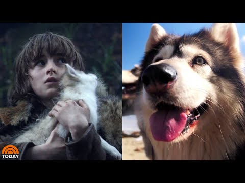 Scott Sloan - VIDEO: Meet The Real-Life Direwolves Of 'Game Of Thrones'