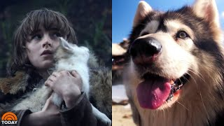 Meet The Real-Life Direwolves Of 'Game Of Thrones' | TODAY
