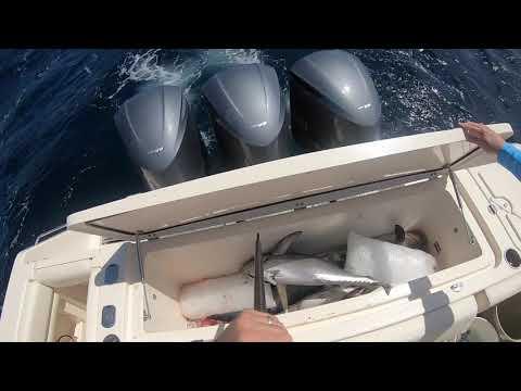 """RATS AZZ"" Grady White 370 Express fishing Steeples"