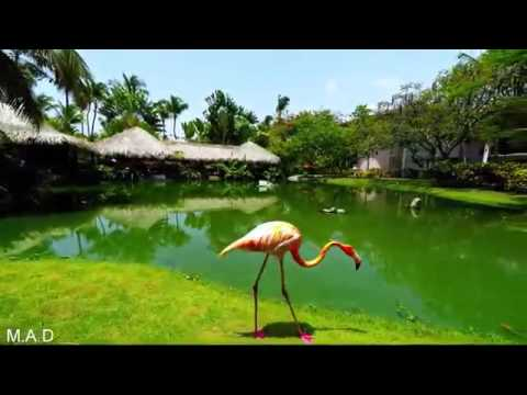 Living and Immigration to Dominican republic  PUNTA CANA /Bavaro Beach