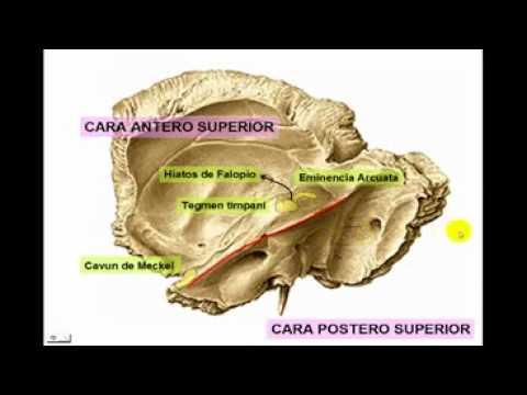 osteología del craneo parte n°4 hueso temporal - YouTube