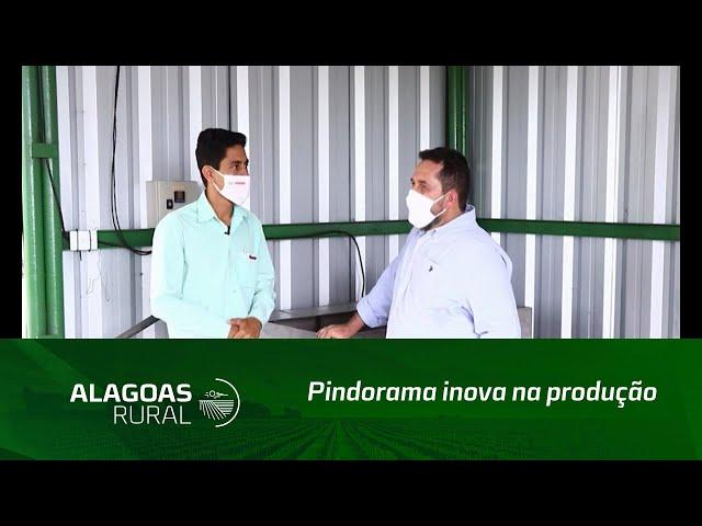Pindorama inova na produção de mudas de cana-de-açúcar