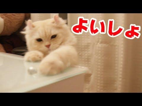 猫のための楽園つくった!