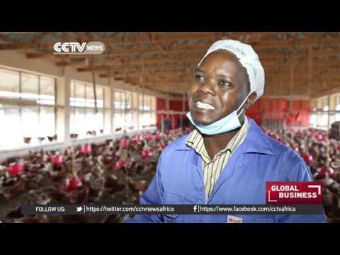 Somalia entrepreneurs want chicken imports stopped
