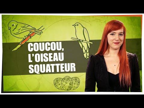 Coucou, l'oiseau squatteur   Castor Mother 03  String Theory