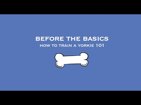How to Train a Yorkie 101: Before the Basics