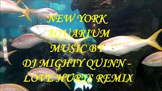 NEW YORK AQUARIUM DJ MIGHTY QUINN   LOVE HURTS REMIX