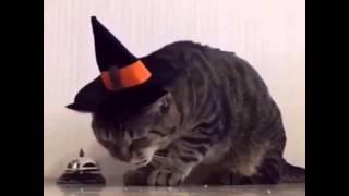 Котик заказывает себе еду😂✌