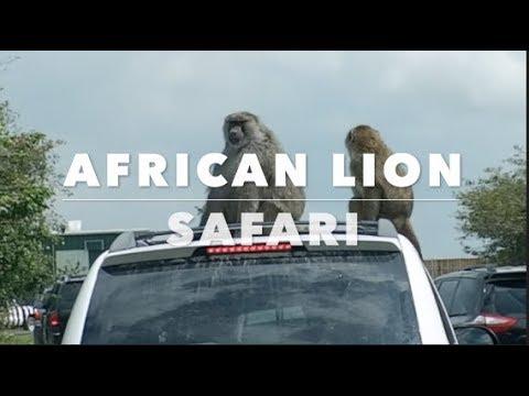AFRICAN LION SAFARI | CANADA | 2017