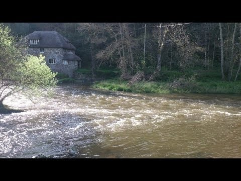 Wild Brown Trout on the fly - River Taw Devon