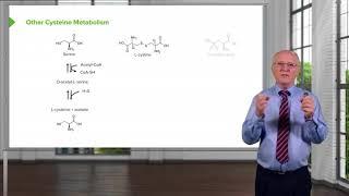 Cysteine Metabolism